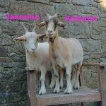 Jasmine&Autumn-OurHerd