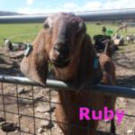 Ruby- new